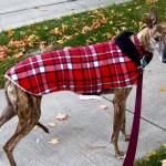 Does Your Dog Need a (Second) Coat?