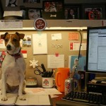 What to Do to Make Your Workplace Dog-Friendly
