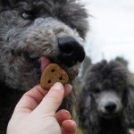 What to Know About Dog Treats