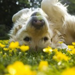 Your Dog's Springtime To-Do List