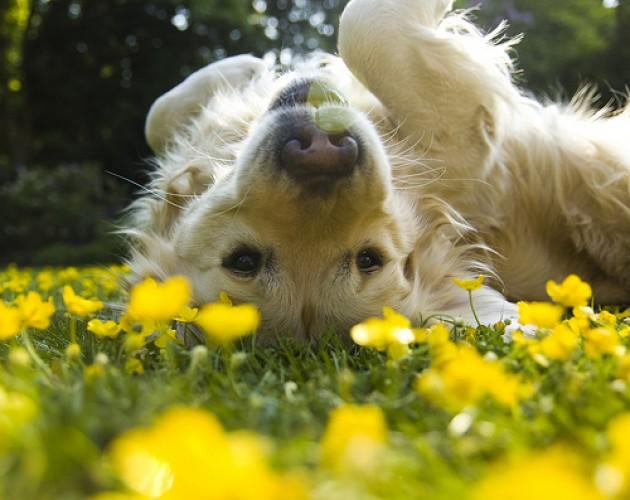Your Dog's Springtime To-Do List