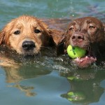 17 Ideas for Summer Fun for Pups and Their People