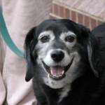 Recognizing & Minimizing CD (Doggie Alzheimer's)