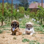 Wineries Are Going to the Dogs