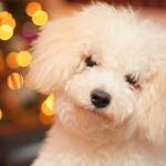 Eight Last Minute Gifts for Pets and People