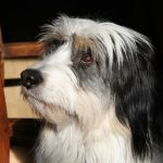 Dog Training: Picking a Pitch Your Dog Understands
