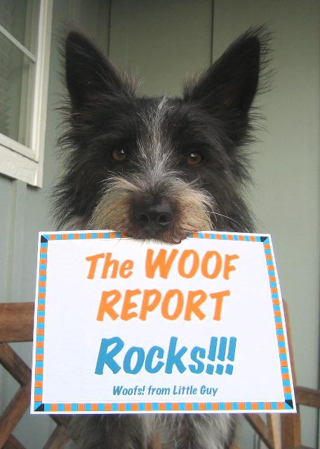 Woof-Report-Rocks-dog-love