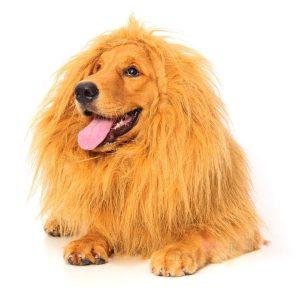 Dog Lion Halloween costume