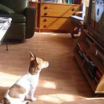 DOGTV Delivers Your Dog's Own Cable Station