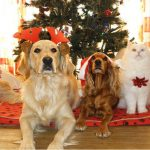 Must-have Holiday Gifts for Dog Moms