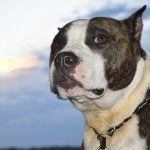 Animal Shelter & Rescue Needs