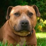 Give a Dog a Second Chance by Fostering