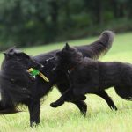 Understanding Pauses in Dog Play and Why You Should Know