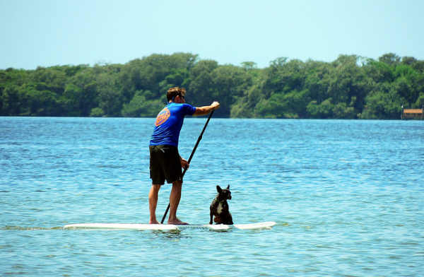 dog-paddleboard