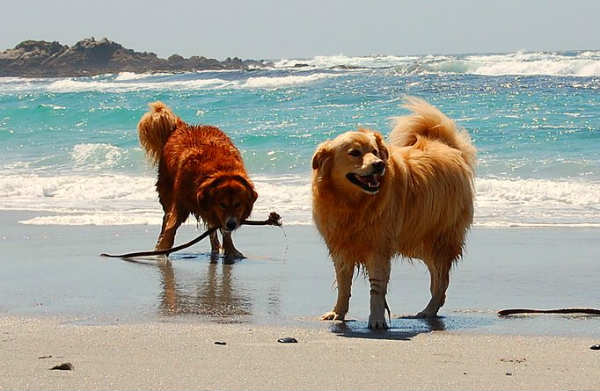 dog-friendly-beach