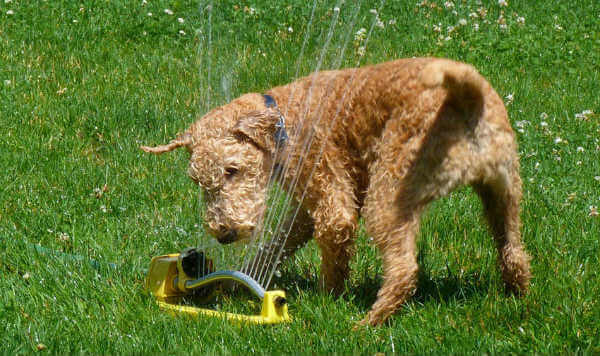 dogs-love-sprinklers