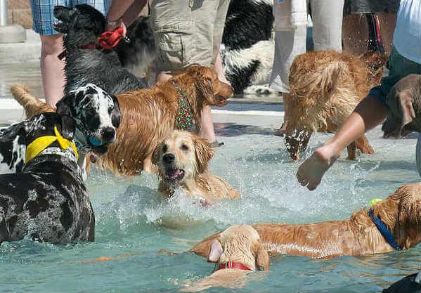 dog-swim-days