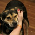 Why Your Dog Adores Ear Rubs