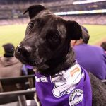 Take Your Dog to an MLB Baseball Game, 2018 Dog Day Game Schedules are Here!