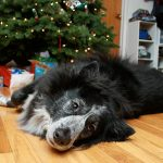 12 Last-Minute Gift Ideas for Dog Lovers