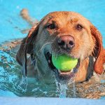 35 Fun Summer Things to Do With Your Dog