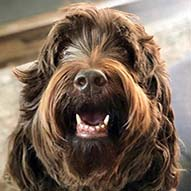 Top Dog Babka