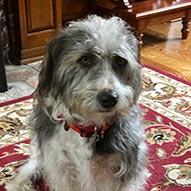 Top Dog Charley