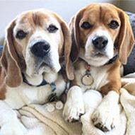 Top Dog Kobe and Dori