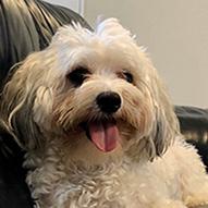 Top Dog Milo