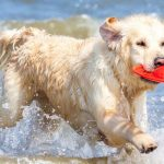 25 Ideas for Summer Fun for Dogs