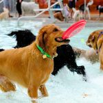 2020 Dog Swim Day Schedules are Here — so are Dog Swim Clubs