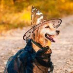 How Your Dog Feels About Halloween Costumes