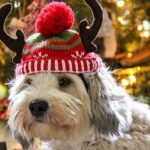 15 Last-Minute Gift Ideas for Dog Lovers
