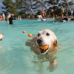 2021 Dog Swim Day Schedules are Here — Hit the Pool with Your Dog!